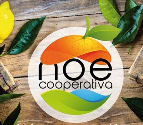 News dalla Cooperativa NOE di Sicilia Vostra