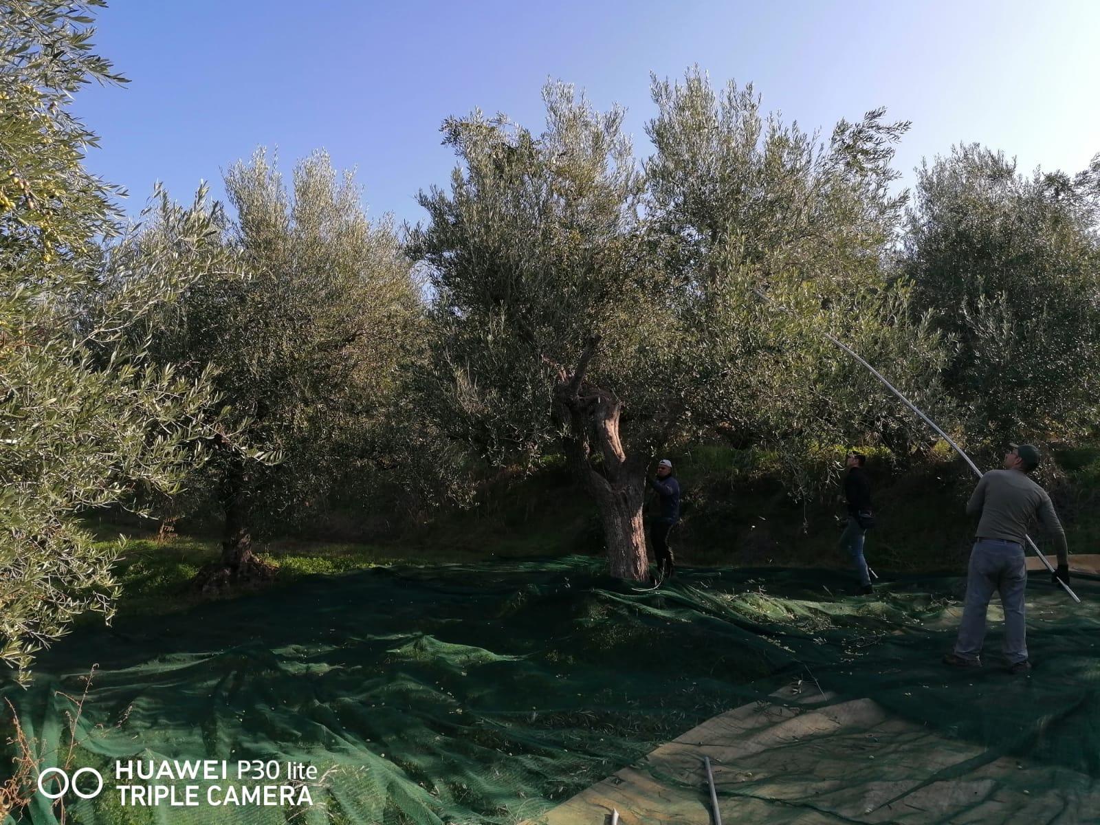 BrunORO – Olio Extra Vergine di Oliva dalla Puglia