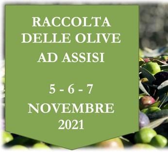 Raccolta delle Olive 5-6-7 Novembre